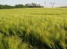 Zemědělské komodity_1