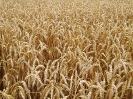 Zemědělské komodity_2