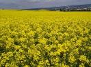 Zemědělské komodity_4